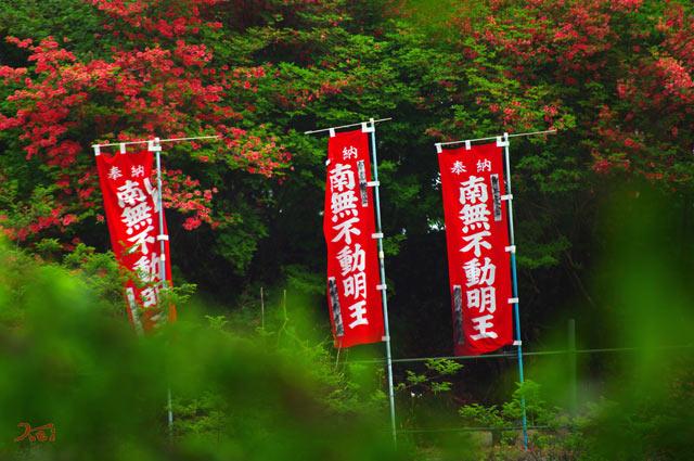110522ぼたん祭り_龍願寺10