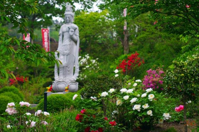 110522ぼたん祭り_龍願寺08