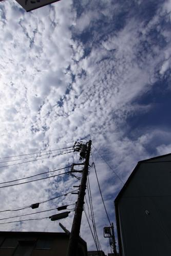 IMG_011001.jpg