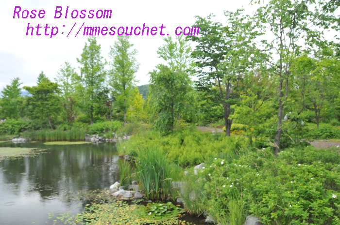 DSC_8956.jpg