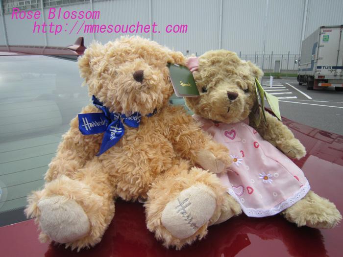 bear20100708.jpg