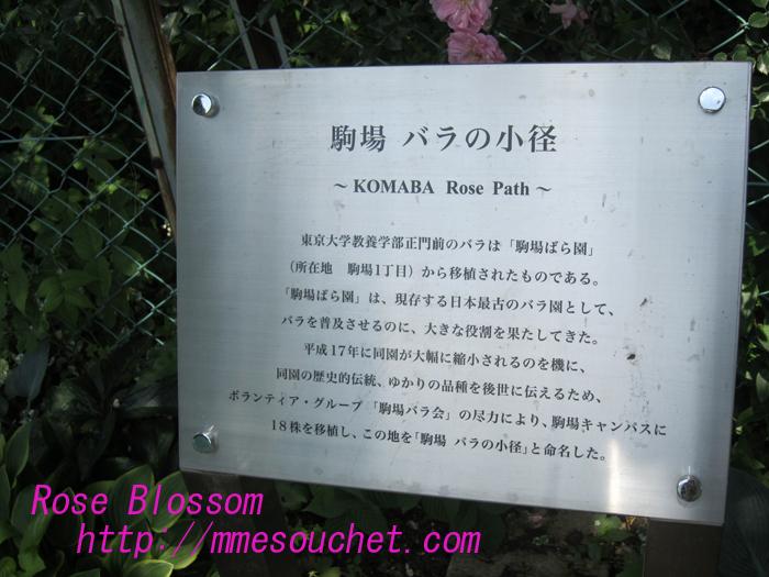komabakomitiboard20100531.jpg