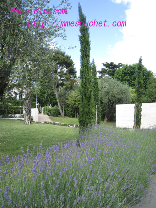 lavender20100613.jpg