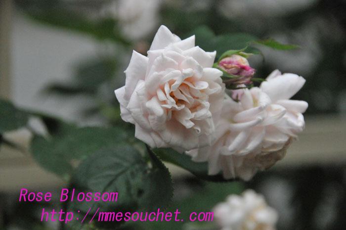 mmesouchet20100605.jpg