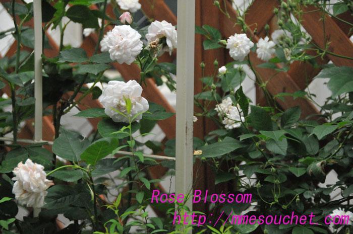 mmesouchetbig20100605.jpg