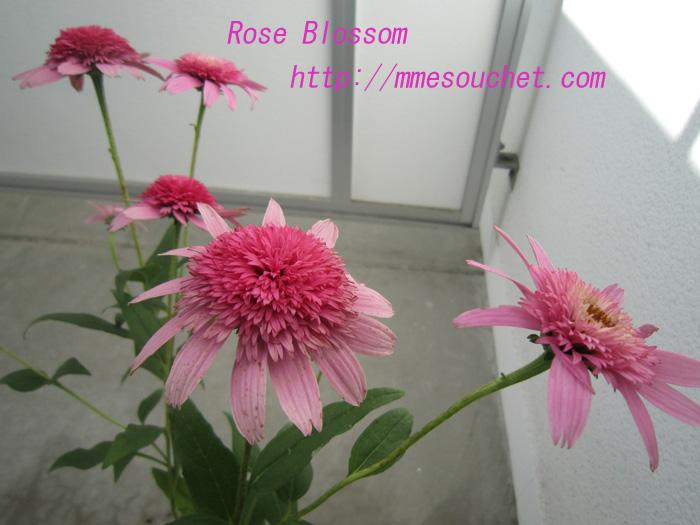 pink20100719.jpg