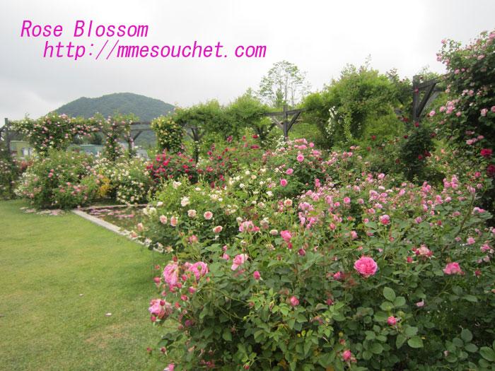 rose201006282.jpg