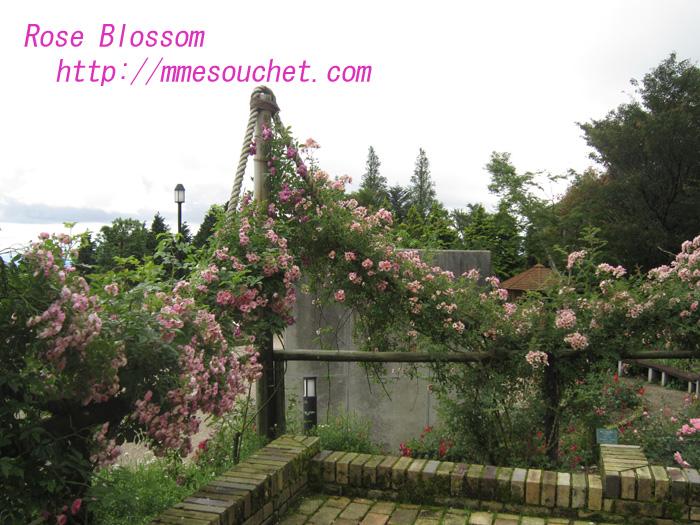 rose201007042.jpg