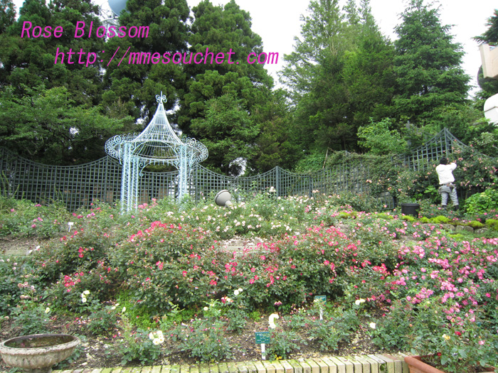 rose201007043.jpg