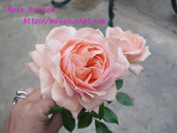 rose201010301.jpg