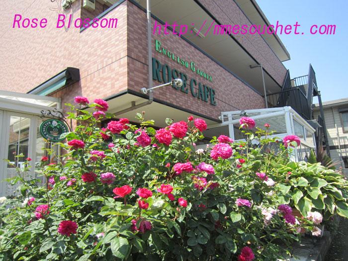 rosecafe201006022.jpg