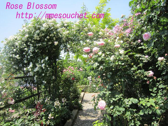 rosecafe201006026.jpg