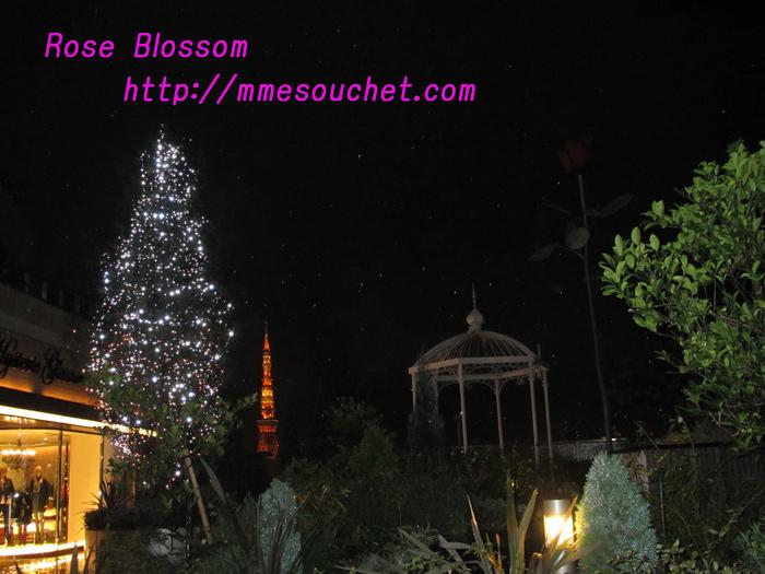rosespot20101115.jpg