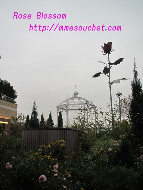 rosespot20101122.jpg