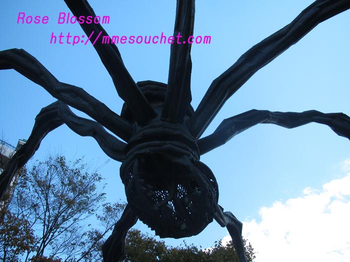 spider20101111.jpg