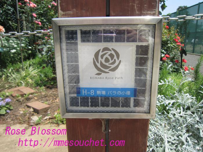 todairoseboard20100531.jpg
