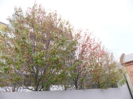 2011_05220096.jpg