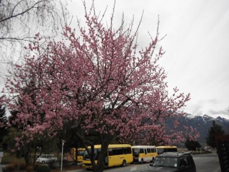 2011_09110053.jpg