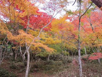 s-20101117瑞宝寺公園と鼓ヶ滝 039
