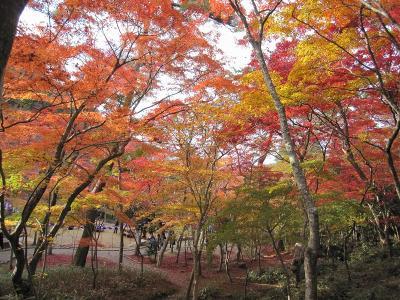 s-20101117瑞宝寺公園と鼓ヶ滝 062