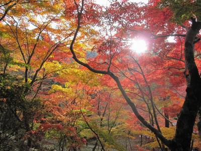 s-20101117瑞宝寺公園と鼓ヶ滝 072