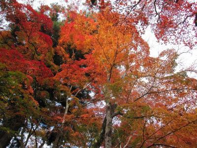 s-20101117瑞宝寺公園と鼓ヶ滝 076