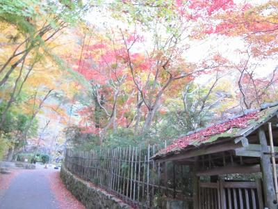 s-20101117瑞宝寺公園と鼓ヶ滝 148