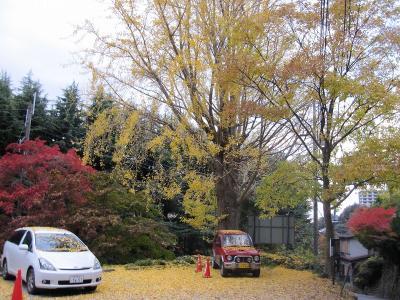 s-20101117瑞宝寺公園と鼓ヶ滝 166