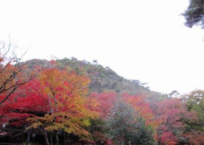 s-20101117瑞宝寺公園と鼓ヶ滝 138