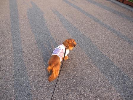 s-20110111ミユともも散歩 015