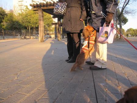 s-20110131ミユとももさくらクー散歩 042