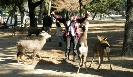 2012奈良へ行った-2
