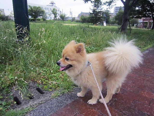 今朝のマール散歩(長田区→兵庫区)&お願い