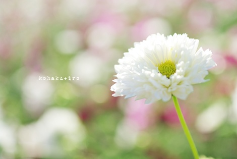 color_20121027230505.jpg