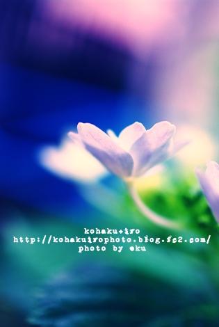 gaku_20120613231359.jpg