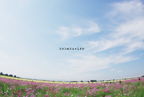 hanabatake_20121119223127.jpg