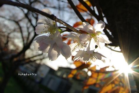 hikari_20121212224119.jpg