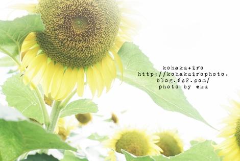 himawari2_20120803202451.jpg