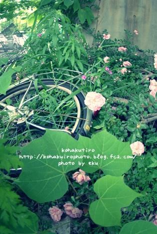 jitensya_20120626224241.jpg