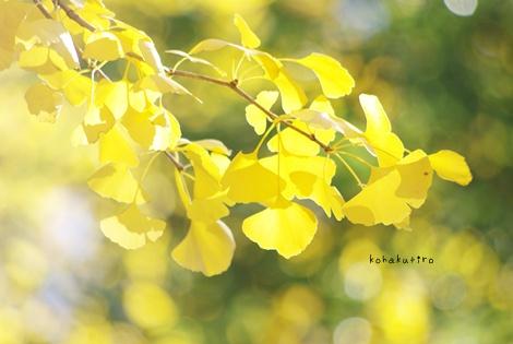 ki2_20121203010245.jpg