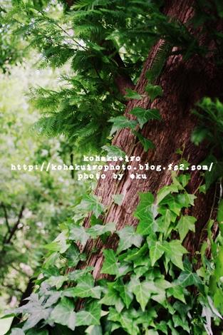 ki_20120623212035.jpg