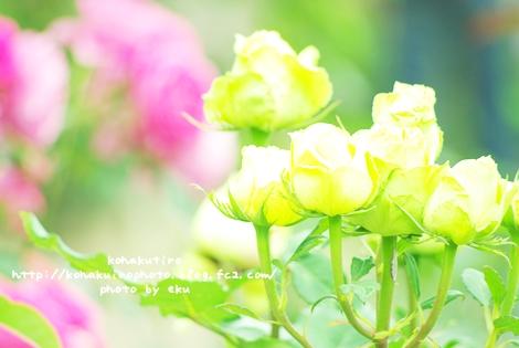 midori_20120626231236.jpg