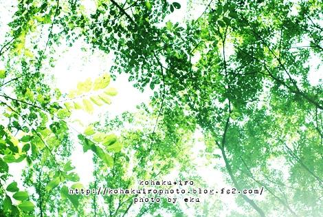 midori_20120730233429.jpg