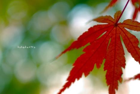 momiji3_20121202224357.jpg