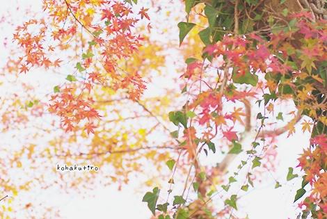 momiji_20121202224239.jpg