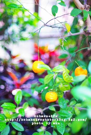 orange_20120611155021.jpg