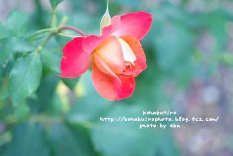 orange_20120626232938.jpg