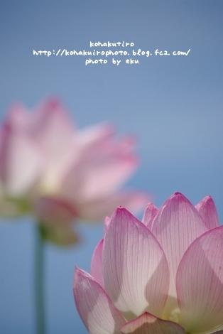 pink2_20120720205037.jpg