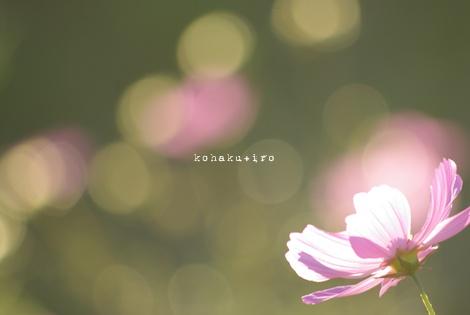 pink2_20121119214046.jpg