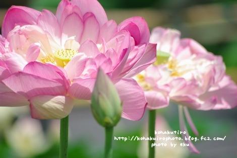 pink3_20120720205153.jpg